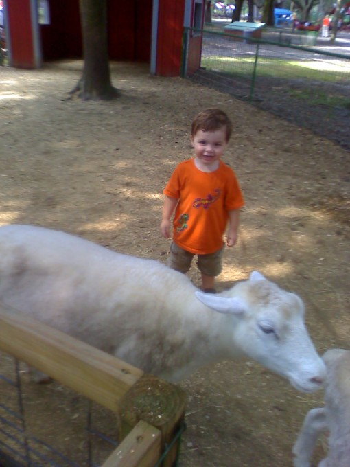 He touched this sheep but very quickly. He just wanted to stand next to them and laugh. He thought they were the funniest things he's ever seen. That's my boy!
