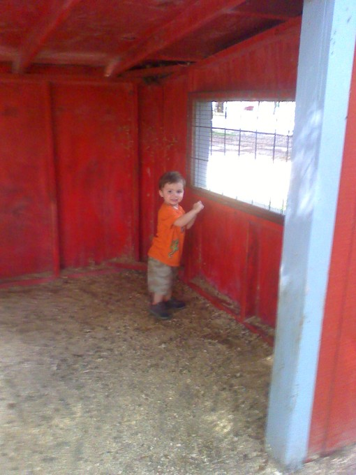 This is the sheep barn. Zeke loved the barn more than the sheep. Go figure.