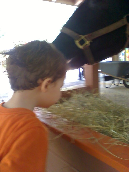 This was Zeke watching the cow eat his hay then trying some himself. He didn't even use his hands...just bent his head over like the cow and took a bite. {sigh} That's my little vegetarian!